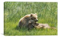 I Got Your Back - Bear Cubs, No. 4, Canvas Print