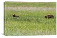 Young Brown Bear Cubs, Canvas Print