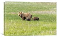 Mother Brown Bear With Her Two Cubs, No. 1, Canvas Print