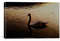 The Sundown Swan, Canvas Print