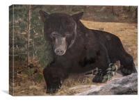 Scruffy the Bear, Canvas Print