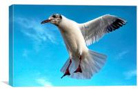 Seagull in Flight, Canvas Print