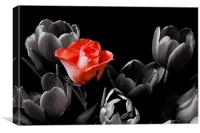 Rose Among Tulips, Canvas Print
