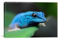 Turquoise Dwarf Gecko, Canvas Print