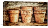 Three Flower Pots, Canvas Print
