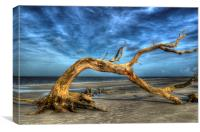 Wind Bent Driftwood, Canvas Print