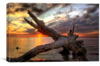 Driftwood Sunset, Canvas Print