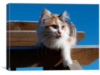 Cat on Archway, Canvas Print