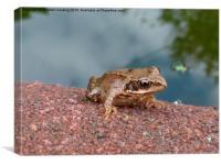 Little Frog, Canvas Print