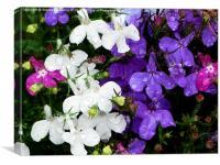 Lobelia Flowers with Rainwater, Canvas Print