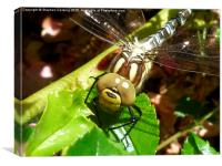 Dragonfly Close Up, Canvas Print