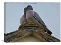 Wood Pigeons on Roof, Canvas Print