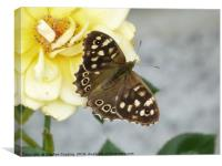 Butteterfly -Speckled Wood , Canvas Print
