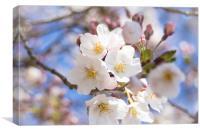 Somei Yoshino - Cherry Blossom, Canvas Print