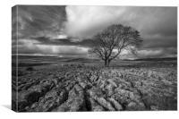 Lone Tree, Malham, Canvas Print