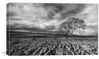 Lone Tree at Malham in the Yorkshire Dales, Canvas Print