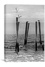 Seagulls  landing on Remains of a Pier, Canvas Print