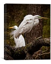Egrets On A Branch, Canvas Print