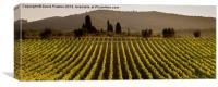 Tuscan vineyard, Canvas Print
