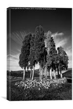 Tuscan Trees, Canvas Print
