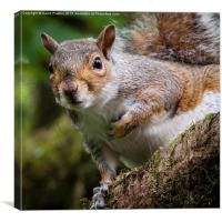 Curious squirrel, Canvas Print