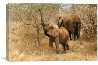 JST2613 Elephants feeding, Canvas Print