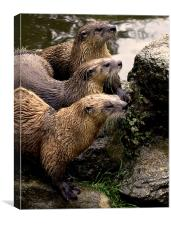 JST2615 European Otters, Canvas Print