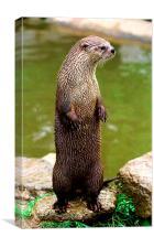 JST2830 British or European Otter, Canvas Print