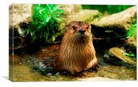 JST2827 British or European Otter, Canvas Print