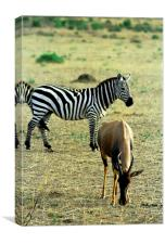 JST2903 Hartebeest and Zebra, Canvas Print