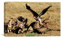 JST2887 Vultures, Canvas Print
