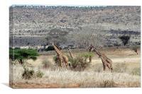 JST3141 Giraffe family, Canvas Print