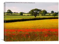 Red Poppies and Green Fields, Canvas Print