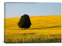Beech Tree in Yellow Field, Canvas Print