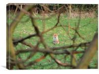 Mr Fox on Guard, Canvas Print
