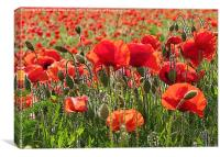 Red Poppy Art, Canvas Print