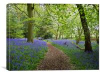 Bluebell Woodland with Blossom Confetti, Canvas Print