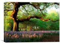 Oak Tree Canopy with Bluebells, Canvas Print