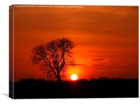 Tree silhouette in a sunset blaze, Canvas Print