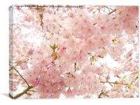 Beautiful pink Spring blossom., Canvas Print