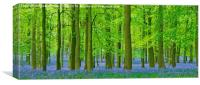 Bluebells and beeches, Canvas Print