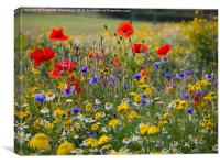 Summer Wild flowers with red poppies, blue cornflo, Canvas Print