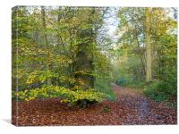 An Autumn Glade at Flaunden, Hertfordshire., Canvas Print