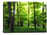 Young Leaves in May Woodland, Canvas Print