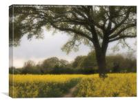 Oak Tree in a Field of Yellow Rapeseed., Canvas Print