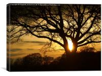 Silhouetted Oak Tree at Sunset, Canvas Print