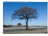 Oak in Hoar Frost with Blue Sky in the Chilterns, Canvas Print