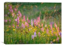 Wild Orchids in Late Evening Light, Canvas Print