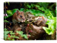 Cute wild woodmouse., Canvas Print