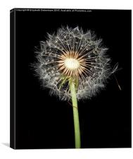 Dandelion time, Canvas Print